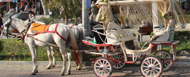 Horses that provide living through carriages and carts